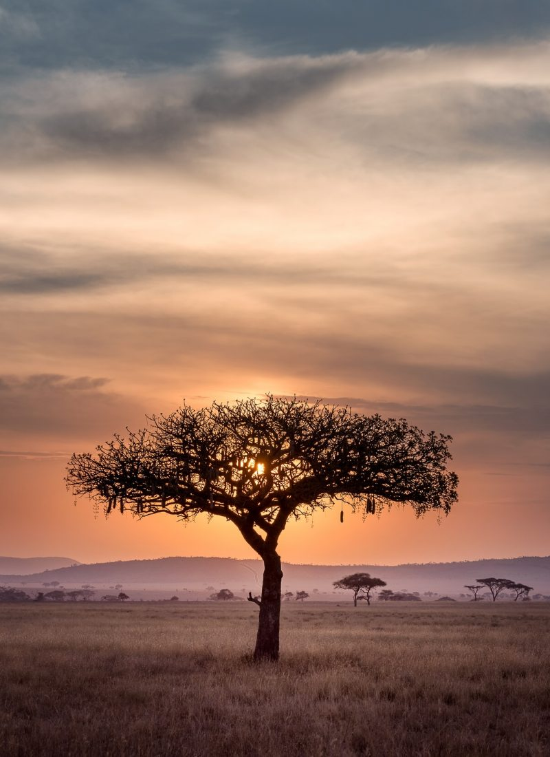 Africa – Top 3 Places to Visit in Africa